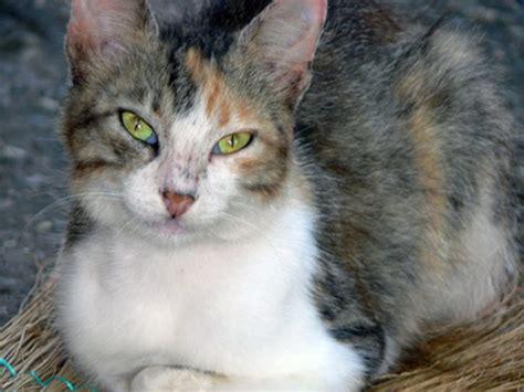 cat herbal sedation picture 6