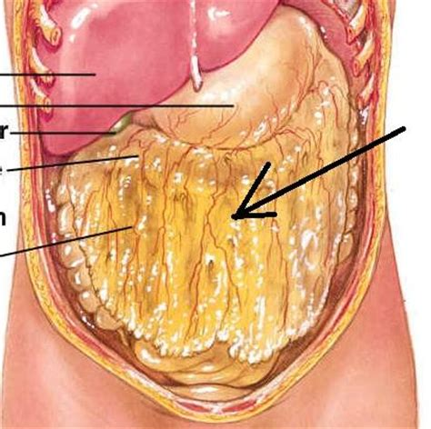 in human bladder amazon picture 9