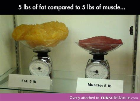 fat weight compared to muscle picture 3