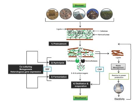 improvement of oil production using microbial enzymes picture 4
