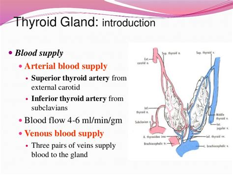 cause increased blood flow to thyroid picture 3