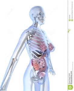 female anatomy pics picture 5