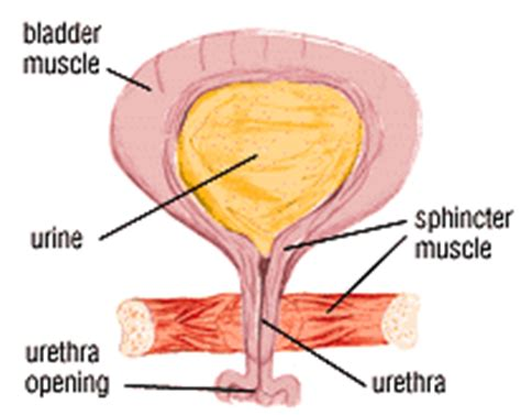 el and bladder incontinence picture 1