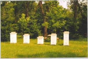 bee hives pictures picture 1
