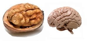 walnuts and el cancer picture 3