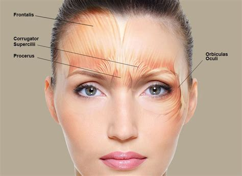 anti aging treatment centre shirley picture 7