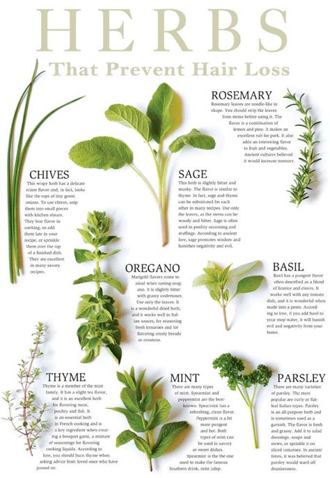 natural herbs to help disolve cyst picture 8