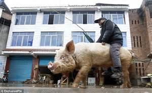 pig illness 2014 picture 1