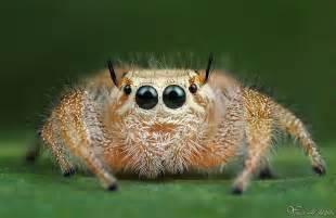 spider pre s picture 13