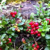 bearberry cellulite picture 3