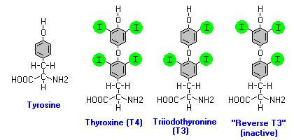 super high thyroid hormone picture 18