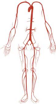 kelacore and blood flow picture 1
