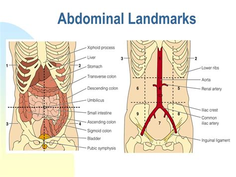 abdominal pain and bladder pain picture 13