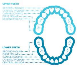 child's teeth chart picture 10