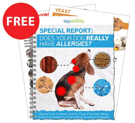 canine bland diet picture 13