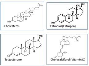 testosterone types steroids picture 3