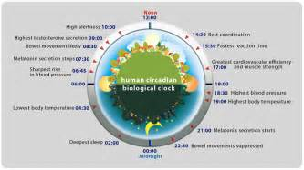 human sleep cycles picture 9