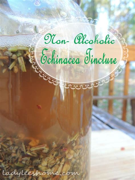 echinacea tincture recipe picture 9