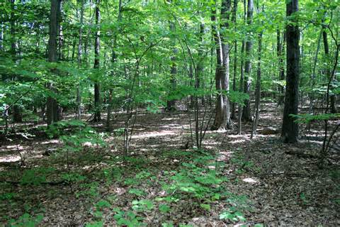 woods picture 3