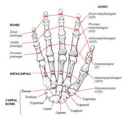bones and joints picture 1