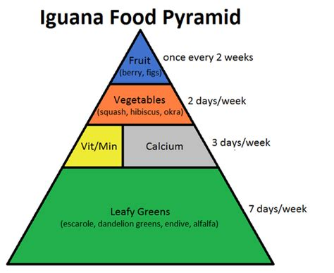 complete iguana diet picture 6