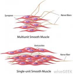 are smooth muscle multinucleated and spindled picture 3