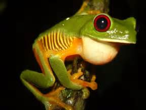 diet for a frog picture 6