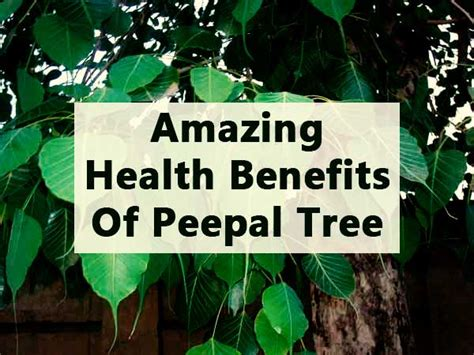 health benefits of sibucao tree picture 2