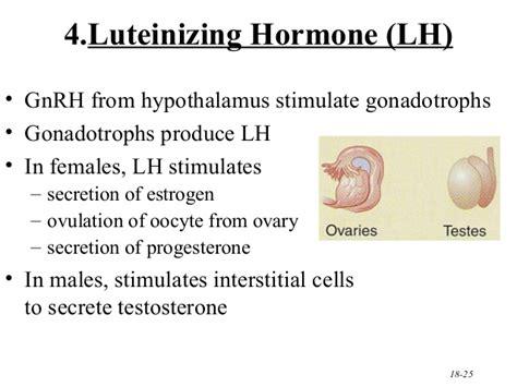define testosterone biology picture 5