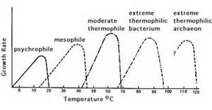 how does tempertature affect microbial growth picture 15