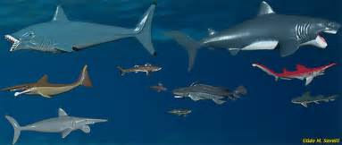 pictures of prehistoric shark h picture 2