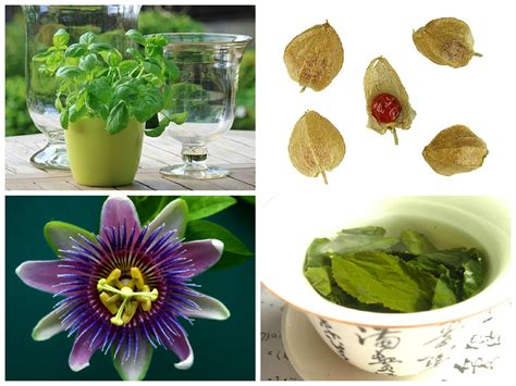 where can you buy herbal medicines picture 7