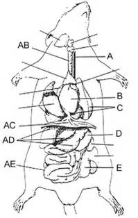 compare and contrast rat gastrointestinal system picture 9