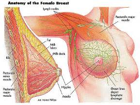 breast milk pills for men picture 2