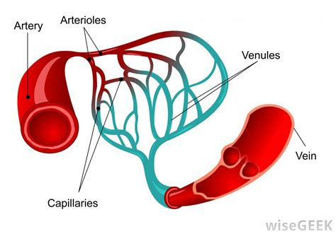 blood flow path picture 11