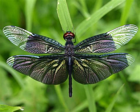 insect picture 15