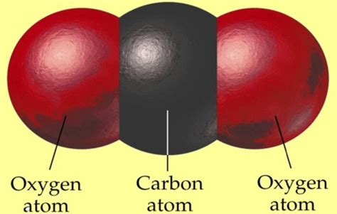 yeast: how does the amount of carbon dioxide picture 9