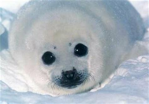 , seal pack hd bp picture 7