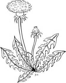 dandelion coloring picture 5