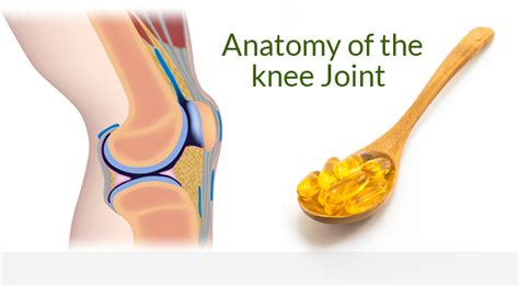 knee joint supplements picture 6