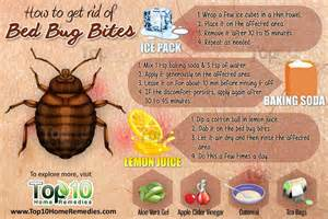 bed bug relief picture 10