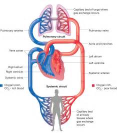 Congestion blood circulation picture 2