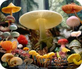 kingdom fungi picture 5