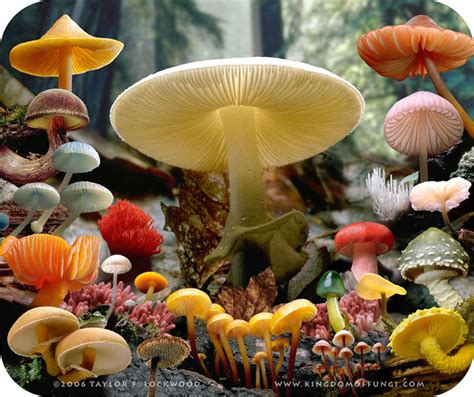 fungi kingdom picture 9