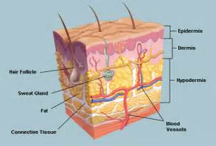 how cultured skin is made picture 13