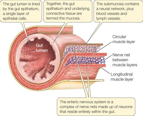 cod liver oil cures glaucoma picture 3