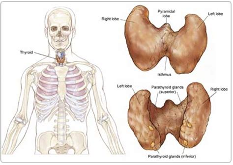 what are the symptoms of a swollen parathyroid picture 8