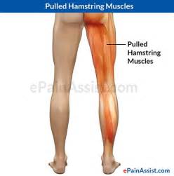 hamstring muscle picture 1
