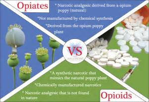 natural herbs that mimic opioids picture 3