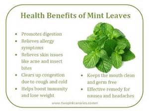 kumintang leaves health benefits picture 1